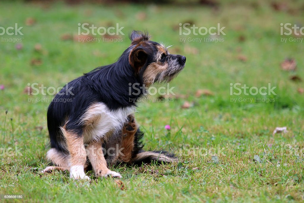 Terrier Mischling stock photo