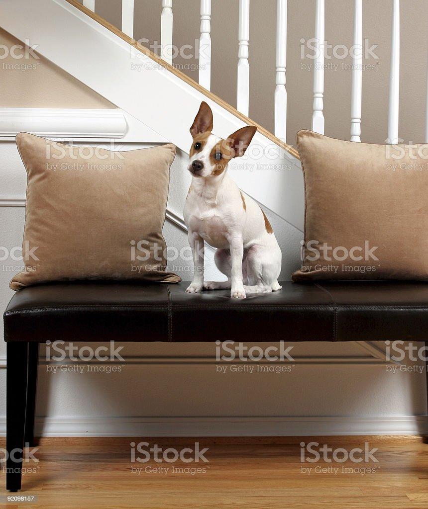 Terrier Tilt stock photo
