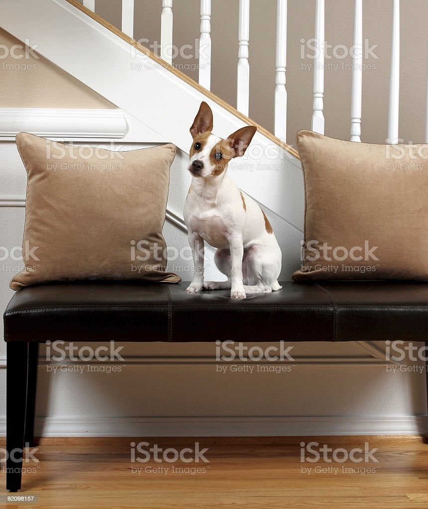 Terrier Tilt stock photo
