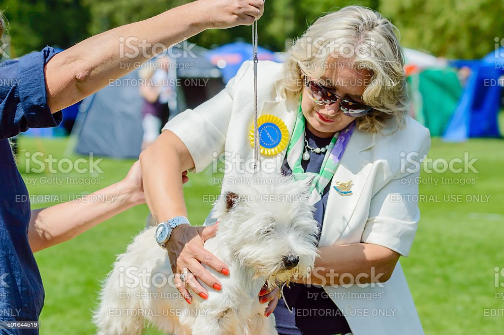 Terrier with judge Natasa Davidovic stock photo