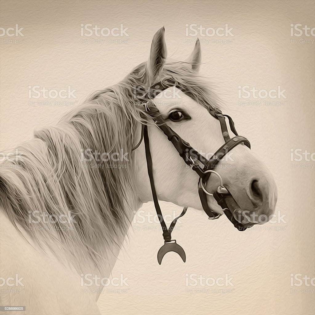 Tersk stallion royalty-free stock photo