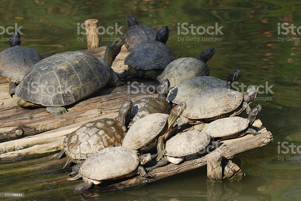 Tertle stock photo