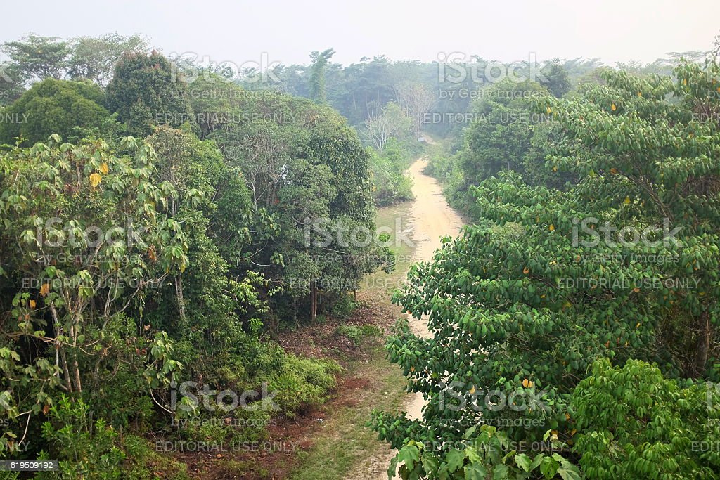 Tesso Nilo National Park. Sumatera. stock photo