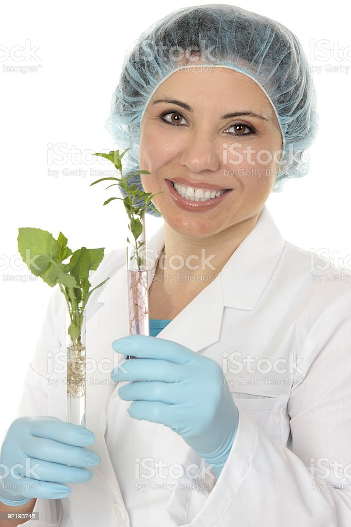Test tube plants stock photo