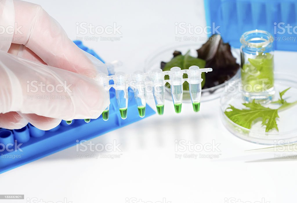 Testing of vegetable samples royalty-free stock photo