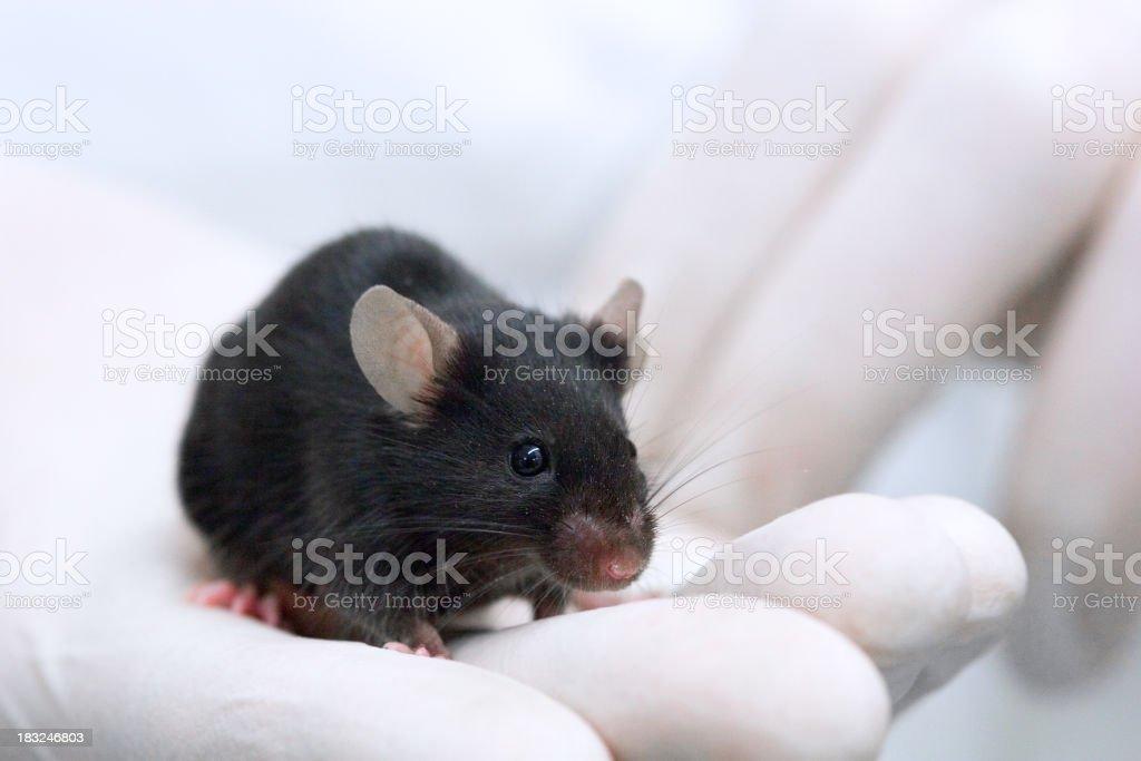 Testing on animals stock photo