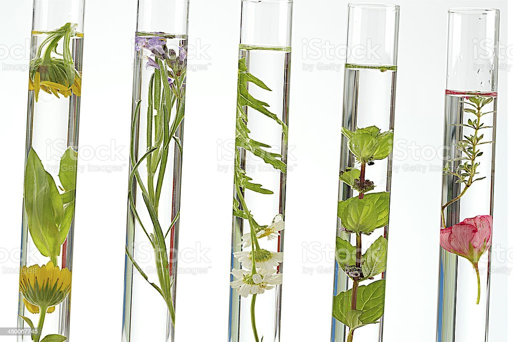 Tests tubes solution of medicinal plants and flowers - stock photo