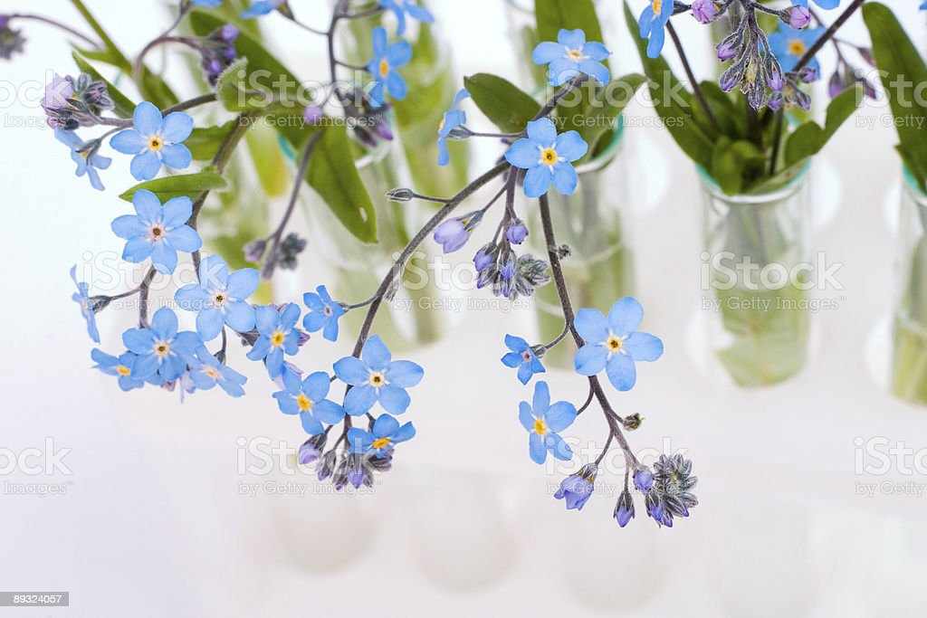 test-tubes with flowers royalty-free stock photo