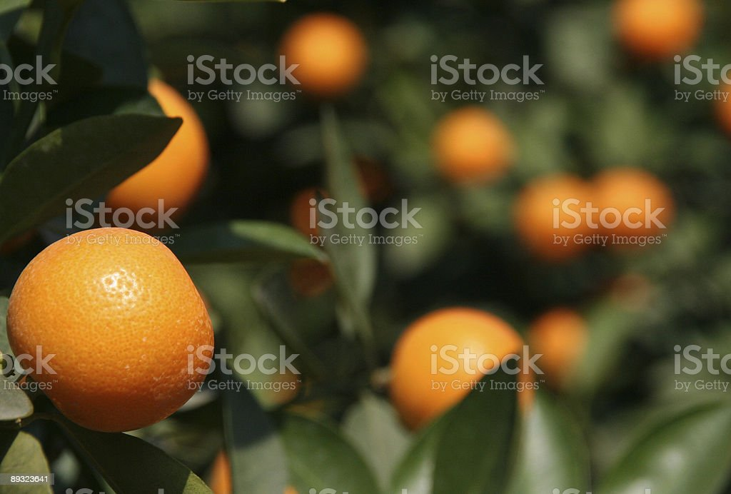 tet fruit stock photo