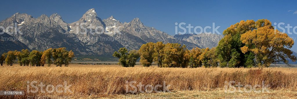 Tetons and Trees royalty-free stock photo