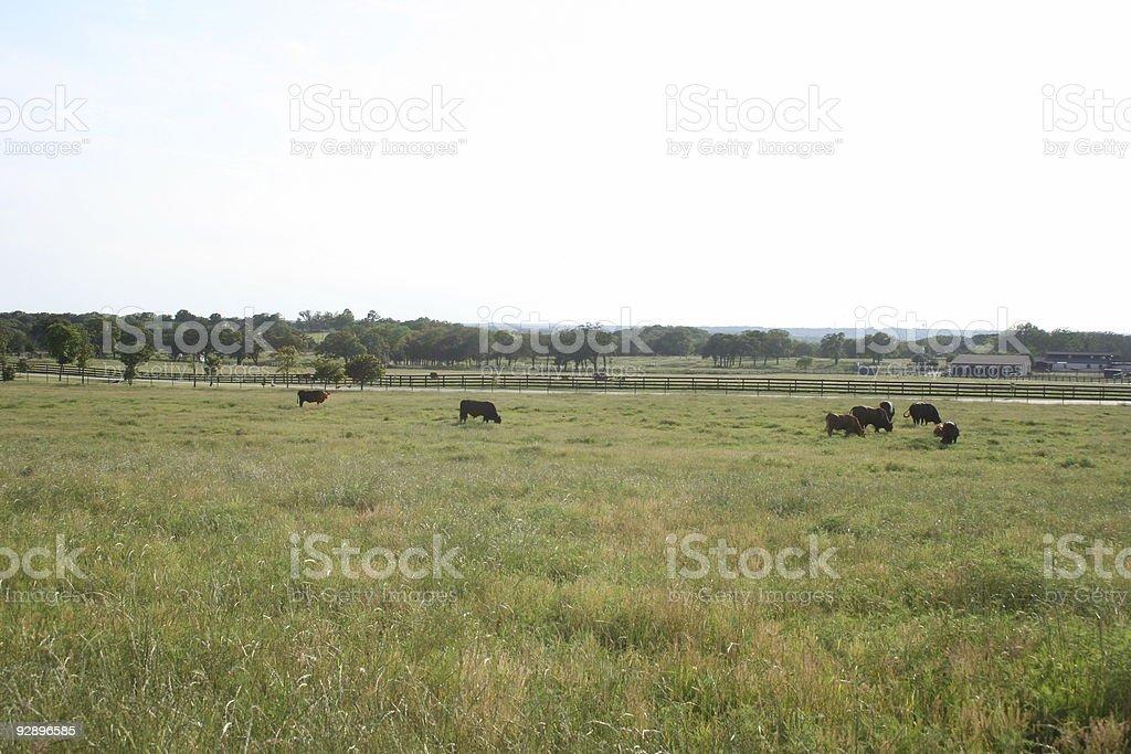 Texan landscape where the steaks grow stock photo