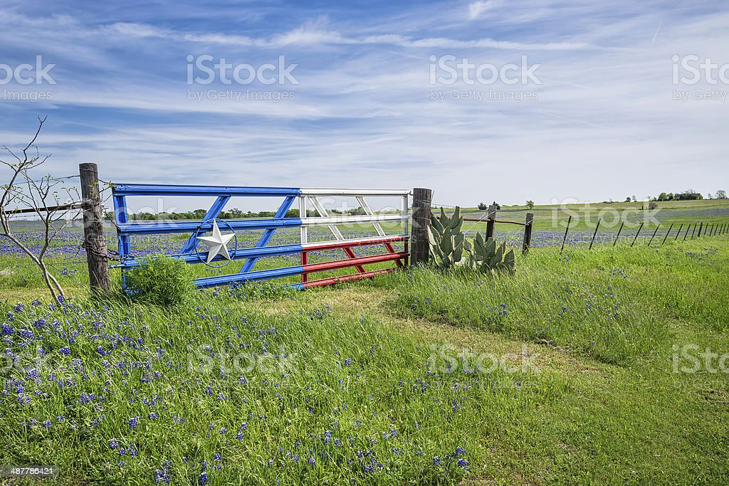 Texas bluebonnet field and fence in spring stock photo