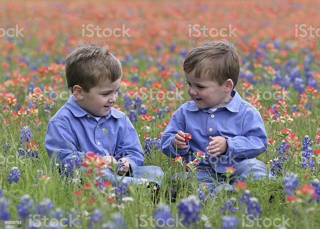 Texas bluebonnet time! stock photo