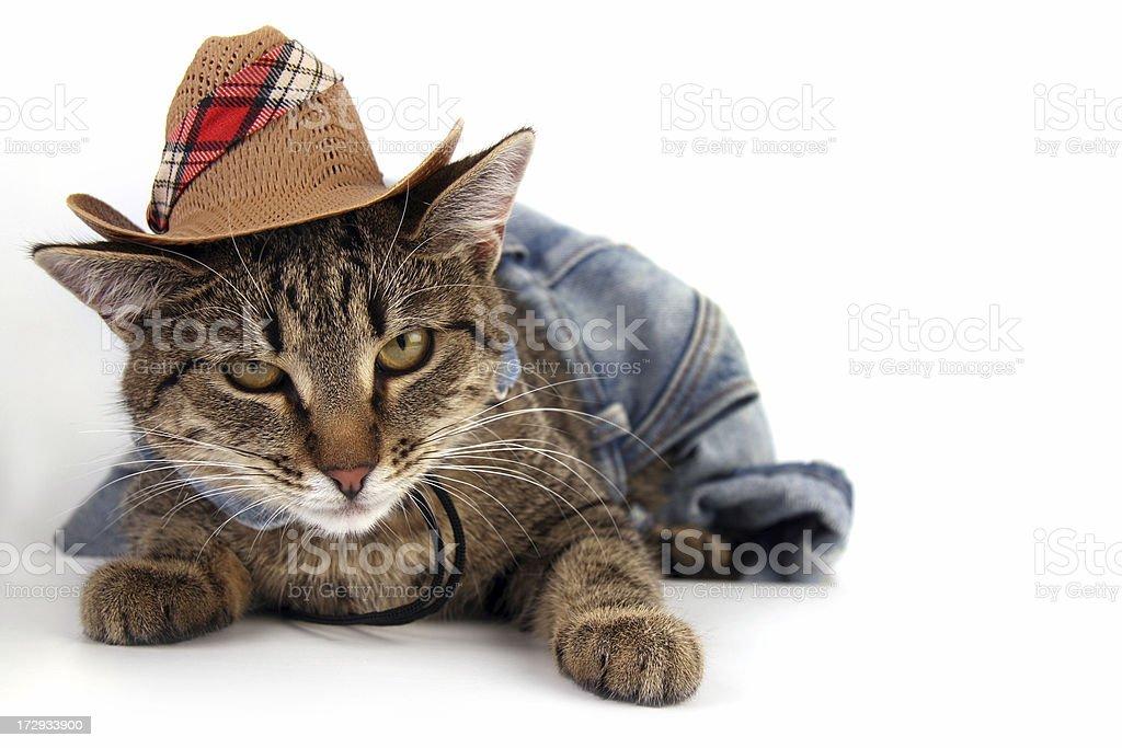 Texas cat royalty-free stock photo