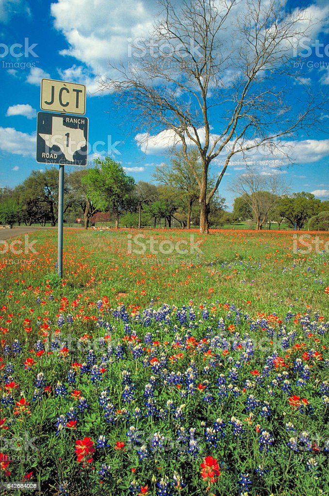 Texas Highway with Bluebonnets stock photo