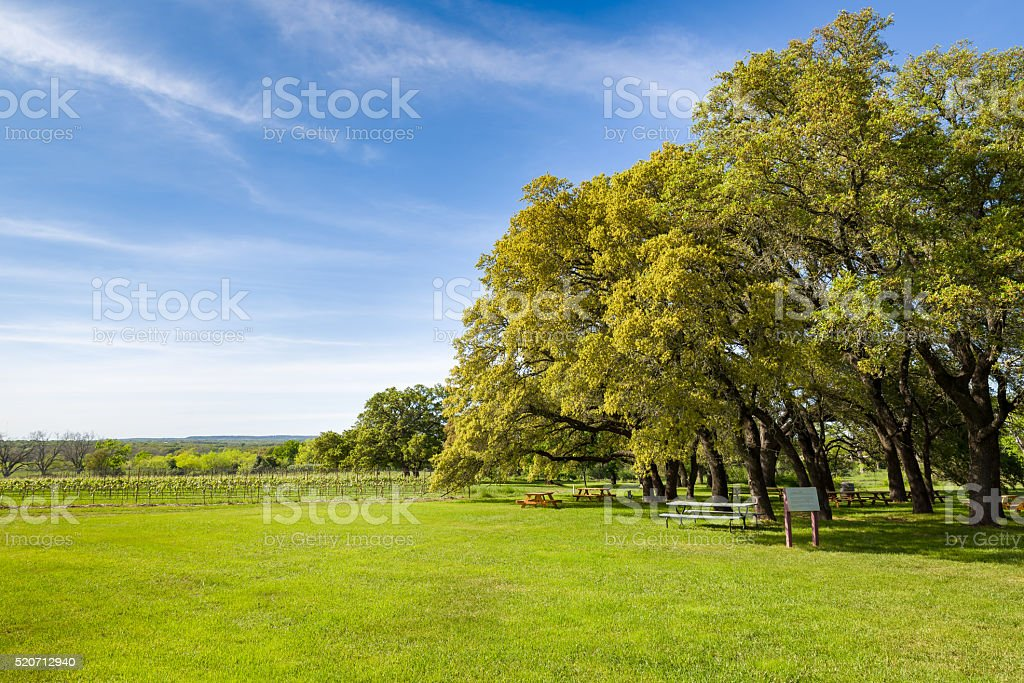 Texas Hill Country Vineyard on a Sunny Day stock photo
