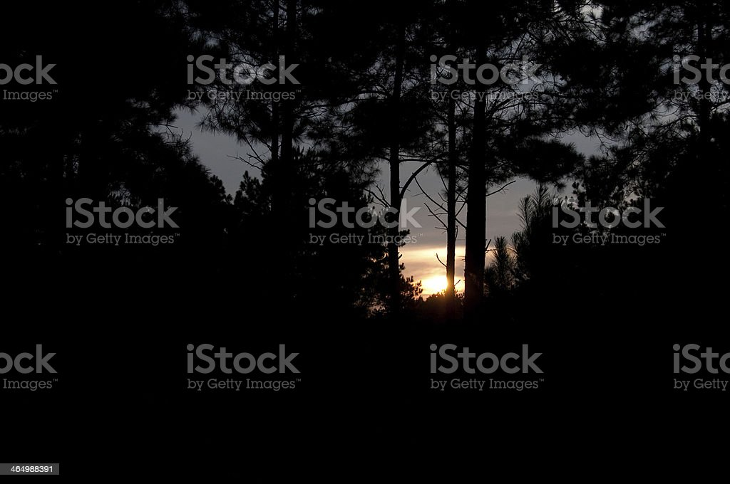Texas Sunset in the Trees stock photo