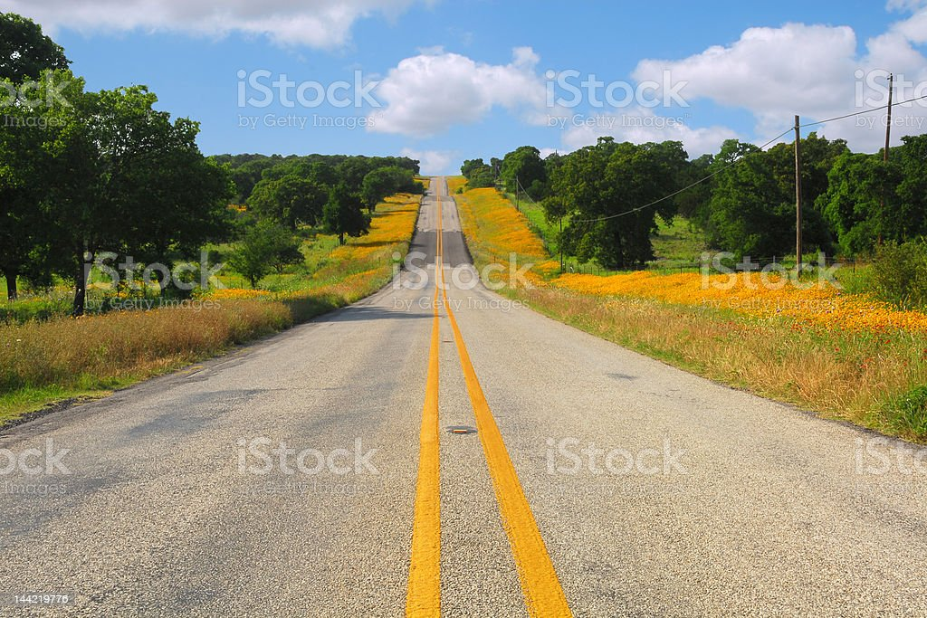 Texas Wild Flower Country Road royalty-free stock photo