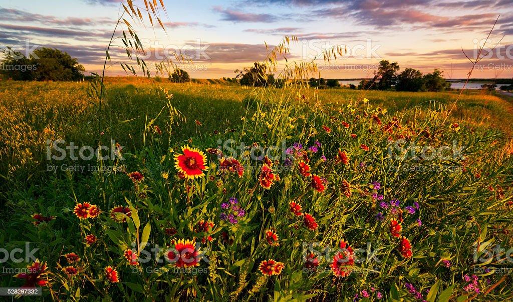 Texas Wildflower Sunset stock photo