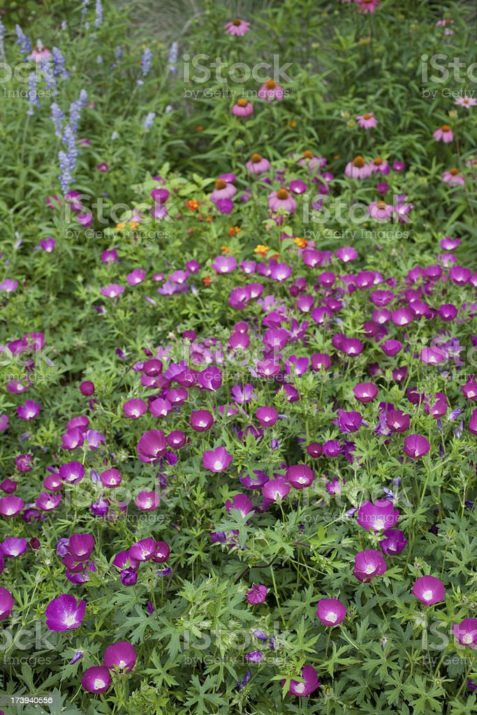 Texas wildflowers (XXXL) royalty-free stock photo