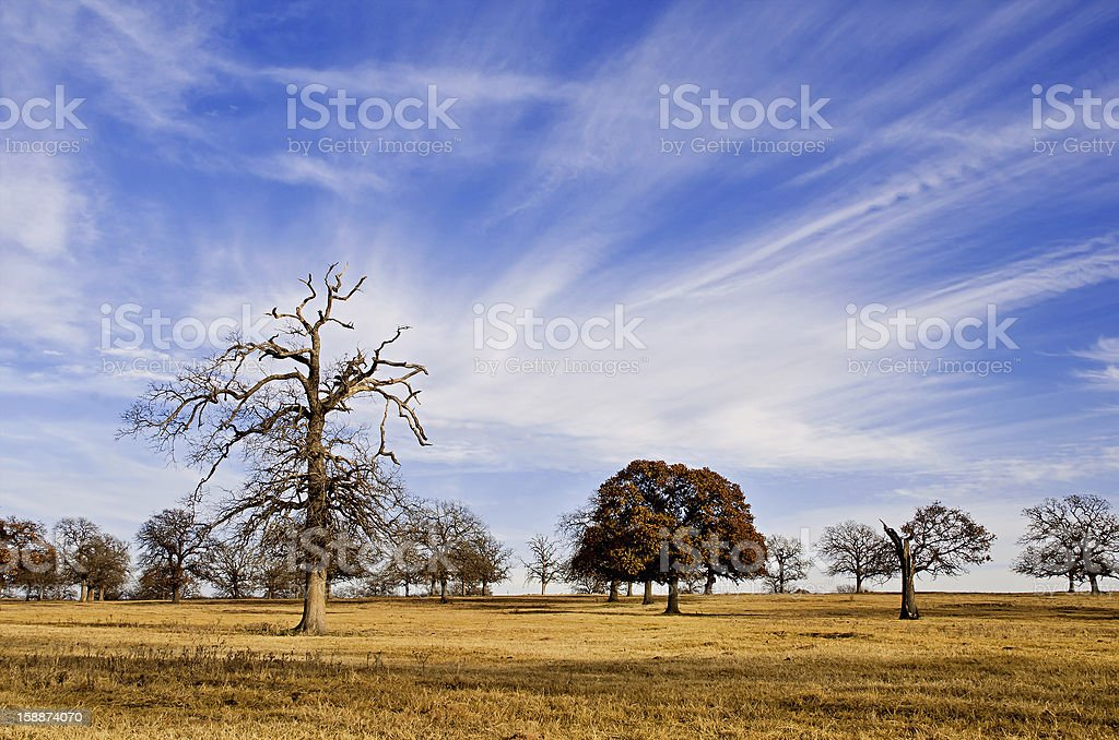 Texas winter sky over scenic trees royalty-free stock photo