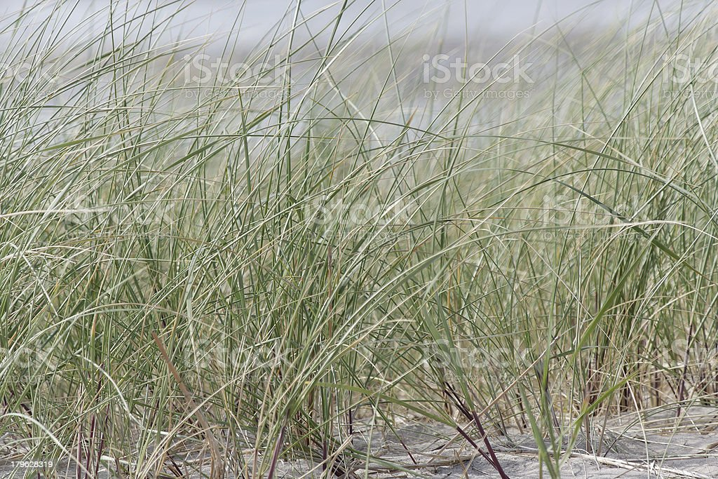 Texel  beach royalty-free stock photo