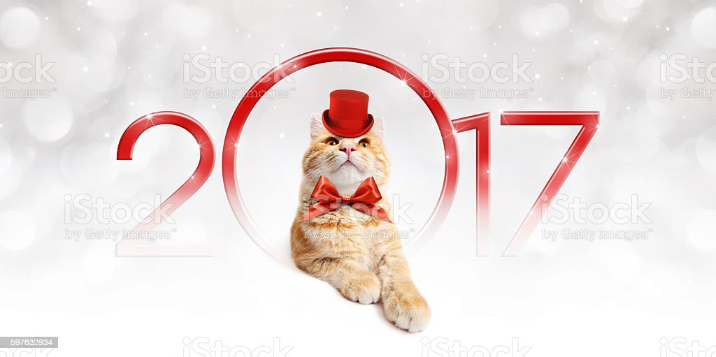 Text 2017 with Christmas magic cat stock photo