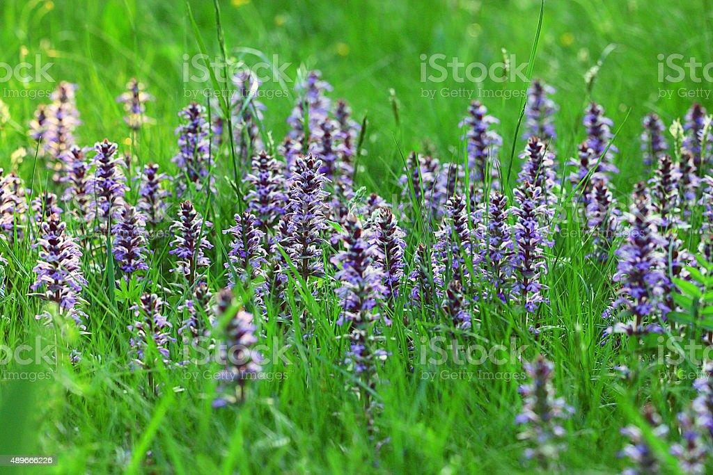 texture background blue flowers grass green stock photo