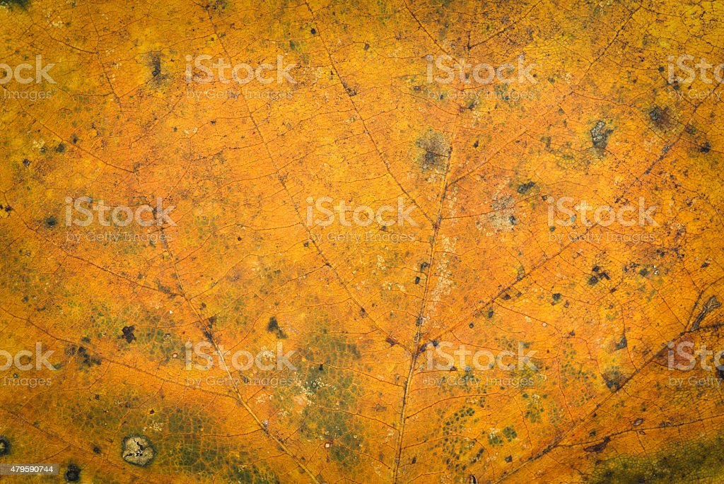 Texture dry leaf royalty-free stock photo