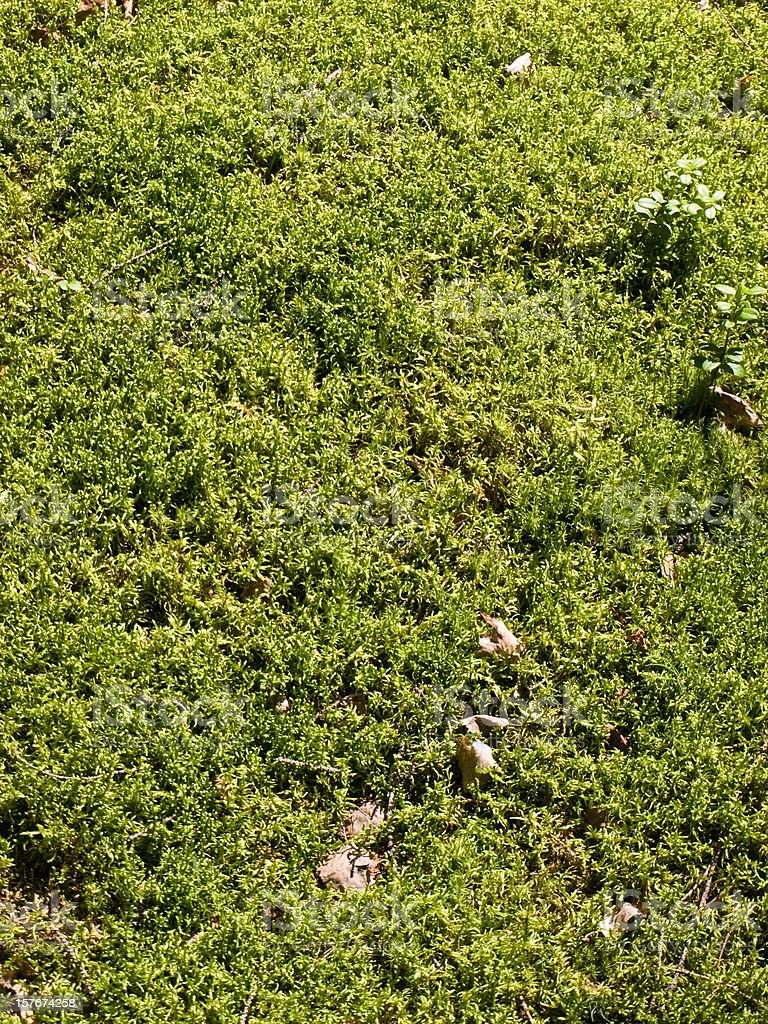 Texture from a moss royalty-free stock photo