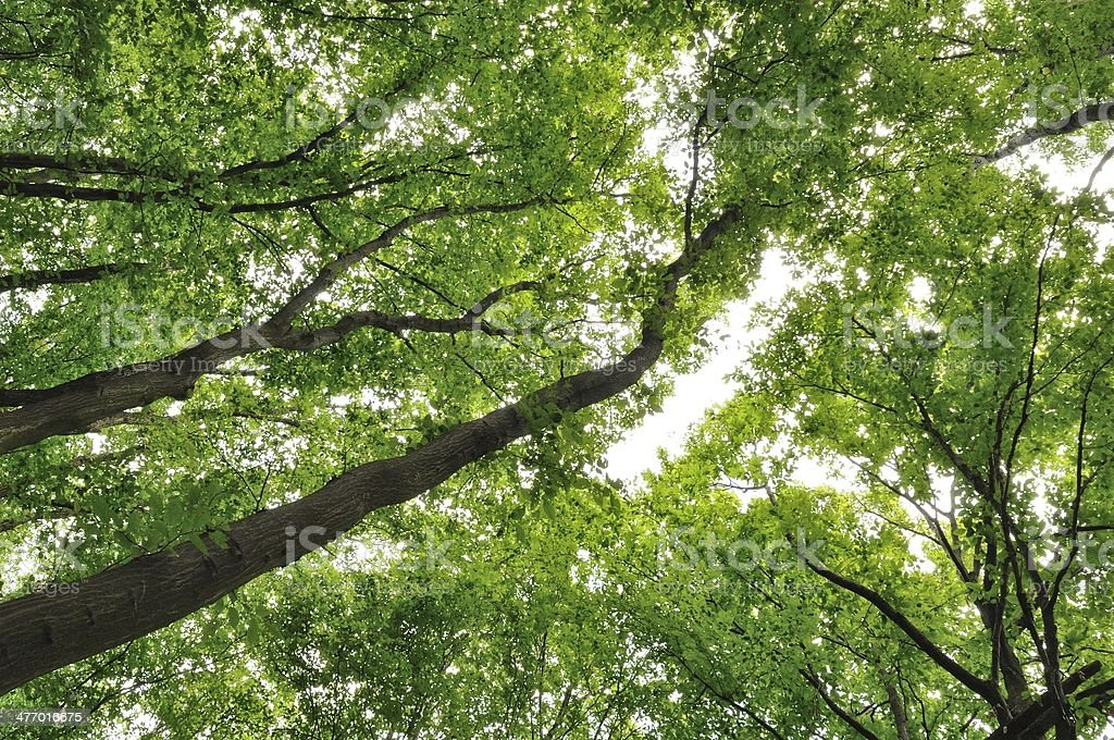 Tekstura z zielonych liści drzew w lesie zbiór zdjęć royalty-free