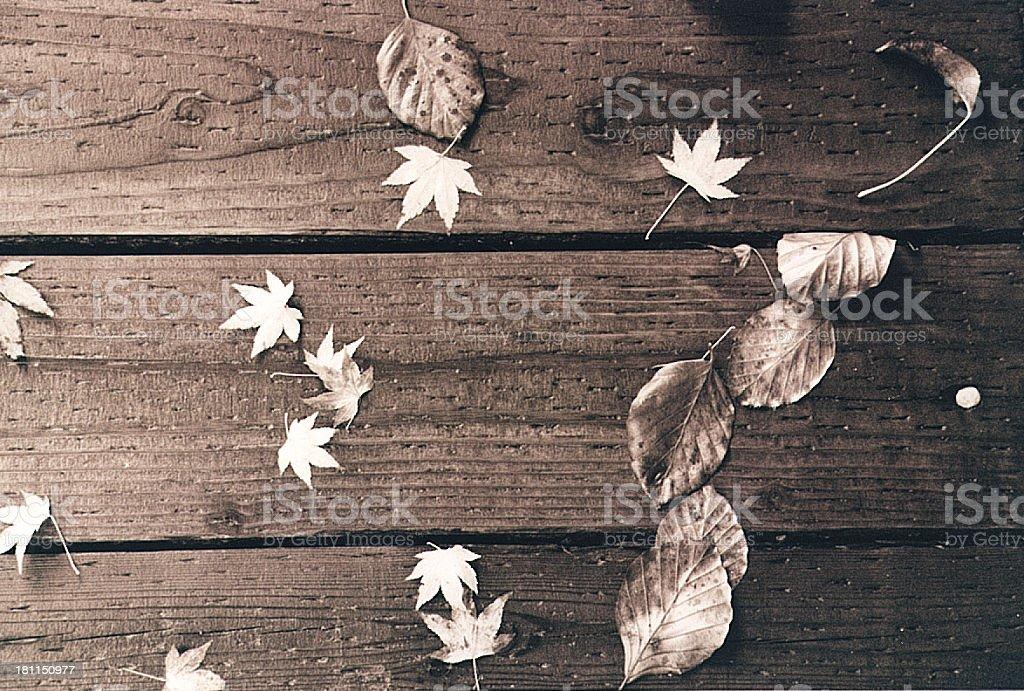 Textura de hojas, veta de madera foto de stock libre de derechos
