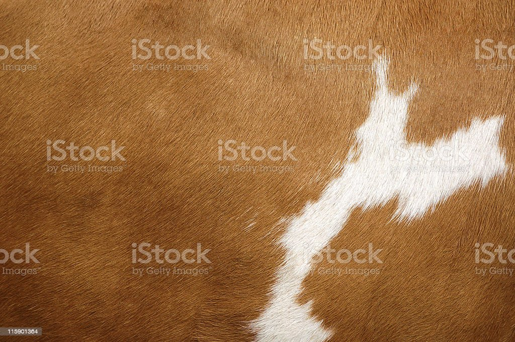 Texture of a Cow Coat 2 stock photo