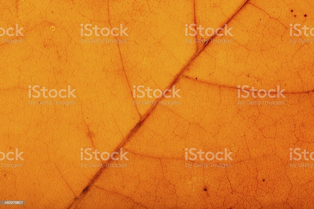 Texture of a leaf royalty-free stock photo