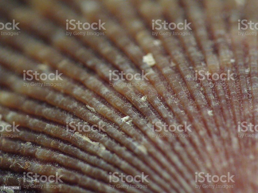 Texture of a seashell stock photo