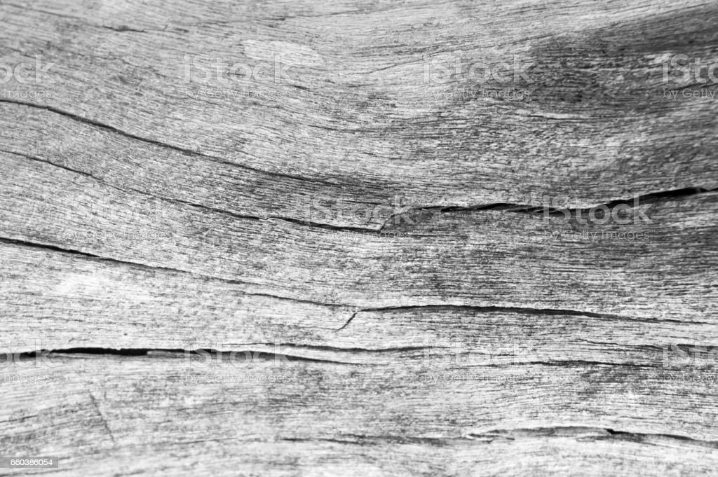 texture of bark wood use as natural background, surface eroded by time , old wood background stock photo