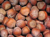 texture of chestnuts