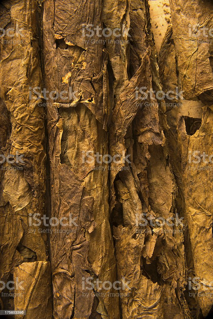 Texture of Cigar Tobacco Leaves stock photo