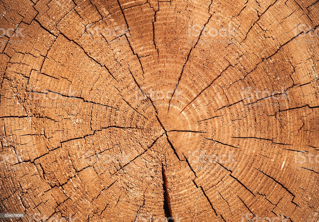 texture of cracked wood stock photo