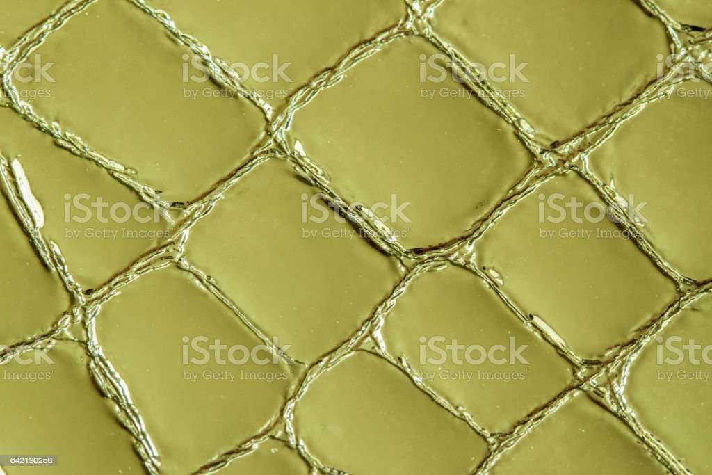 Texture of genuine leather close-up, embossed under the skin a khaki crocodile. For modern pattern, wallpaper or banner design. With place for your text stock photo