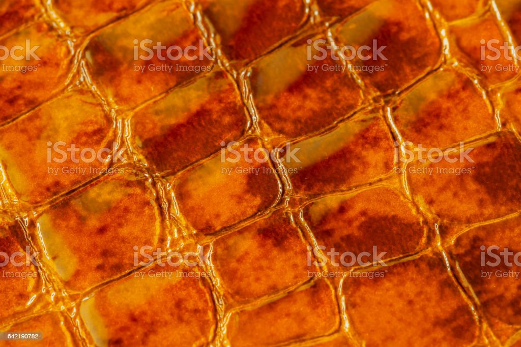 Texture of genuine patent leather close-up, embossed under the skin a orange-brown reptile. For modern pattern, wallpaper or banner design. With place for your text stock photo