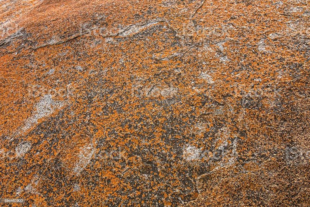 Texture of Golden yellow orange Lichen on rocksม Remarkable Rock stock photo