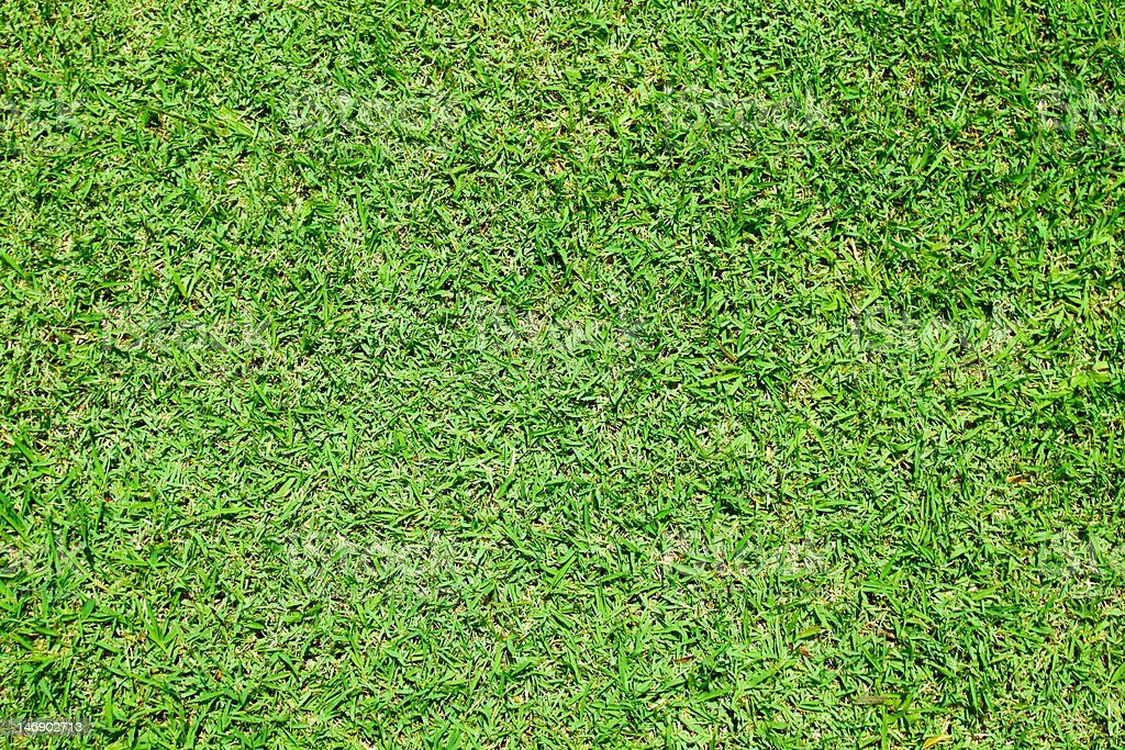 texture of green grass royalty-free stock photo