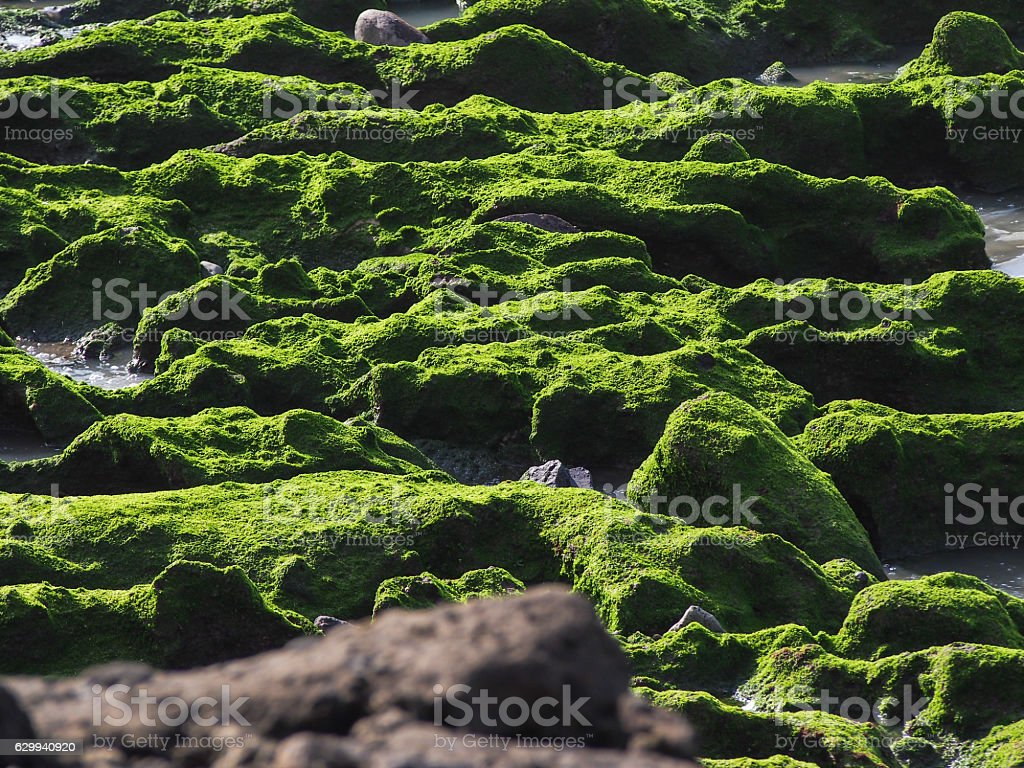 Texture of green moss on the rock stock photo