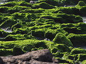 Texture of green moss on the rock