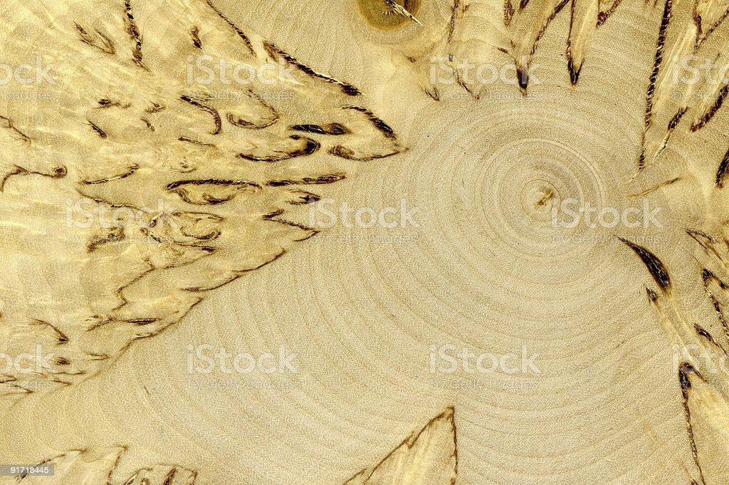 texture of Karelian birch. royalty-free stock photo