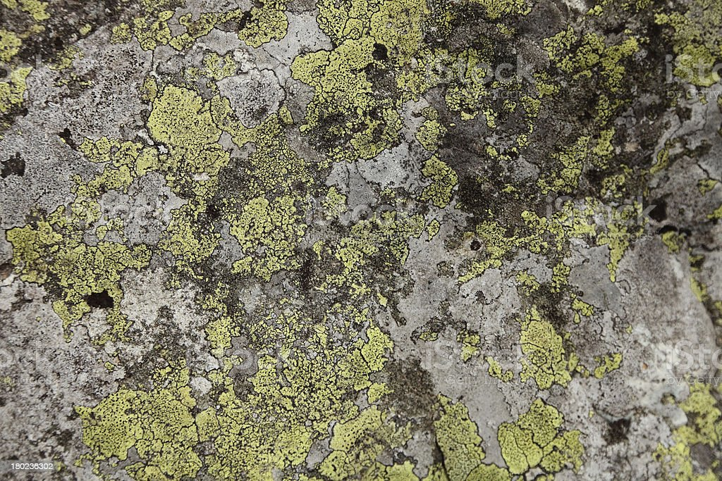 texture of moss royalty-free stock photo