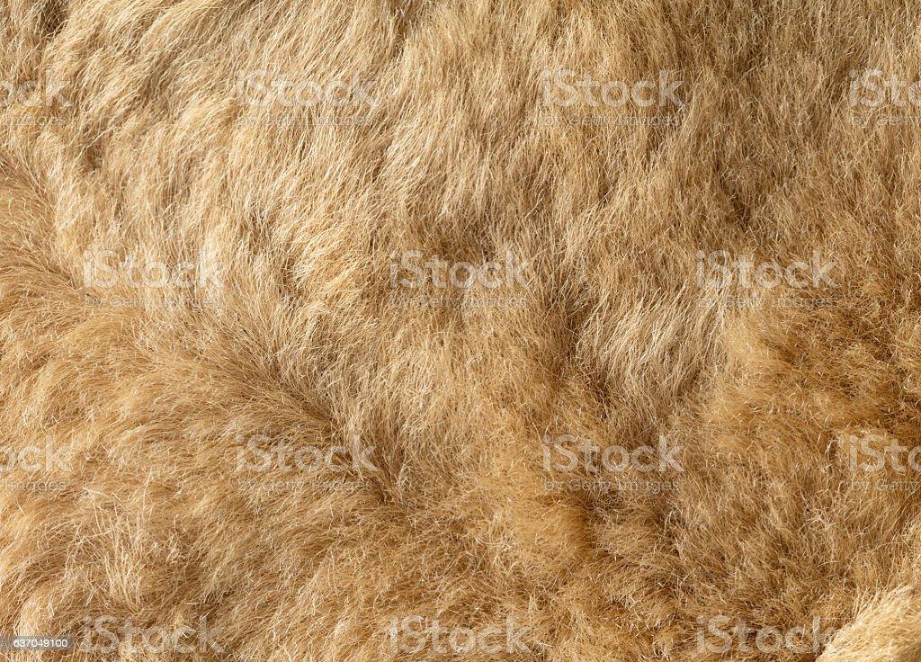 texture of natural fur - fotografia de stock