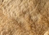 texture of natural fur