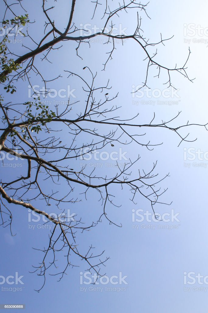 texture of old brown twig with blue sky stock photo
